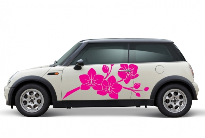 Autoaufkler Orchidee